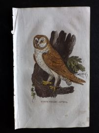 Brightly 1815 Antique Hand Col Bird Print. Common Owl